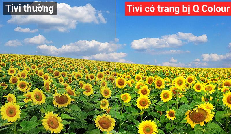 q-color-tivi-samsung-55q7fn